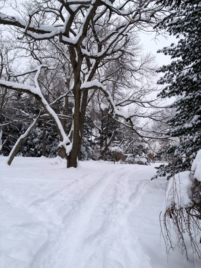 Winter path through the Arboretum