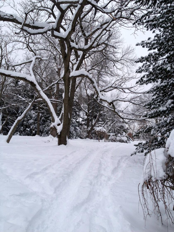 Winter path through the Arboretum