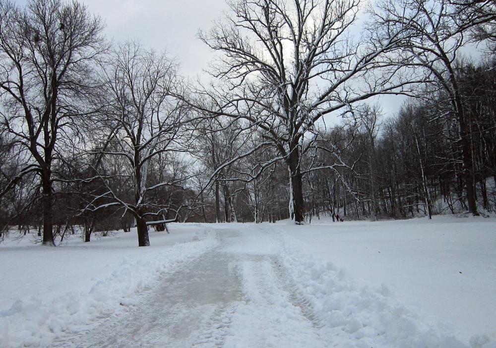 Arboretum path to the toboggan hill