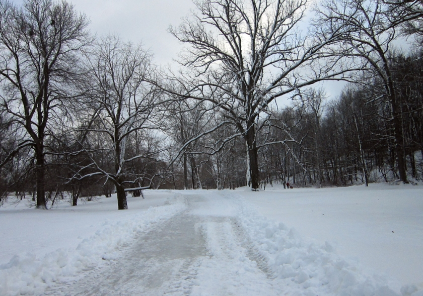 Arboretum path to the toboggan hill