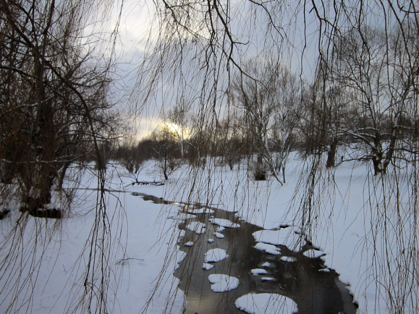 Creek through willow branches