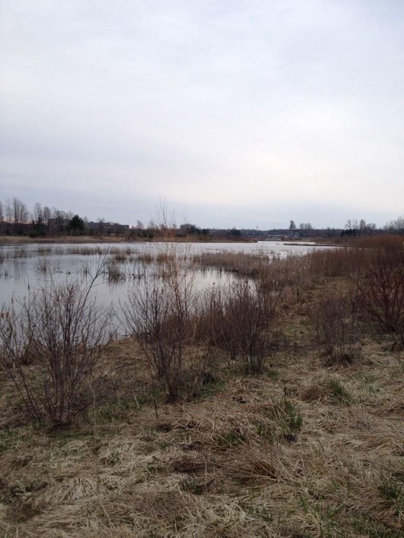 Sawmill Creek Wetlands