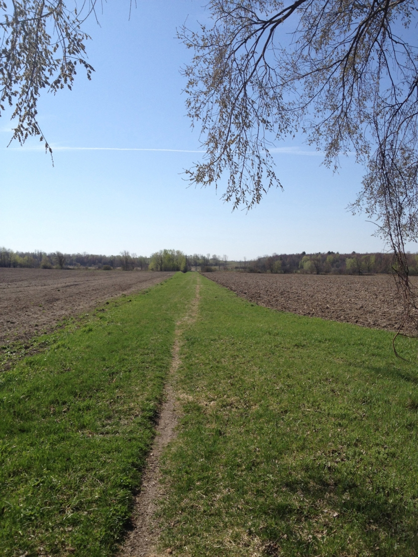 Trail between fields