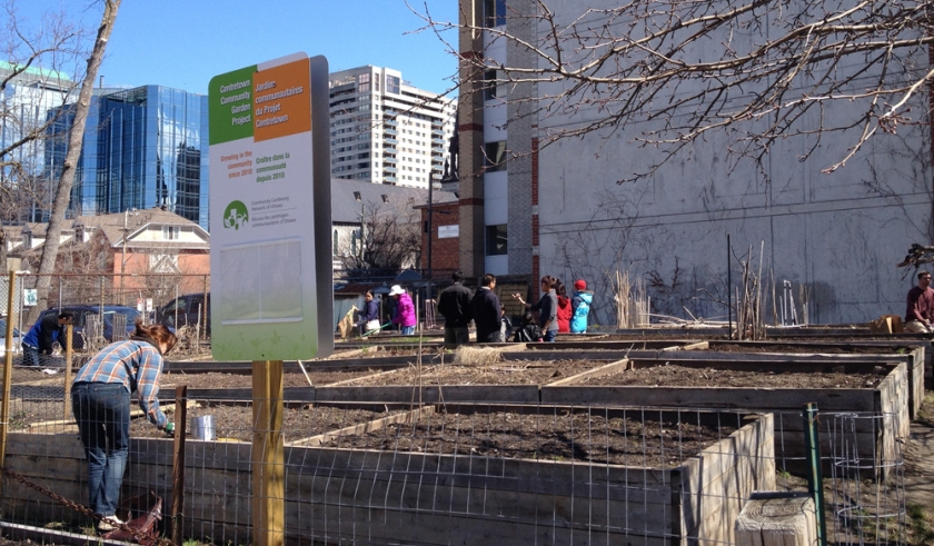 Spring clean up at the Centretown Community Garden