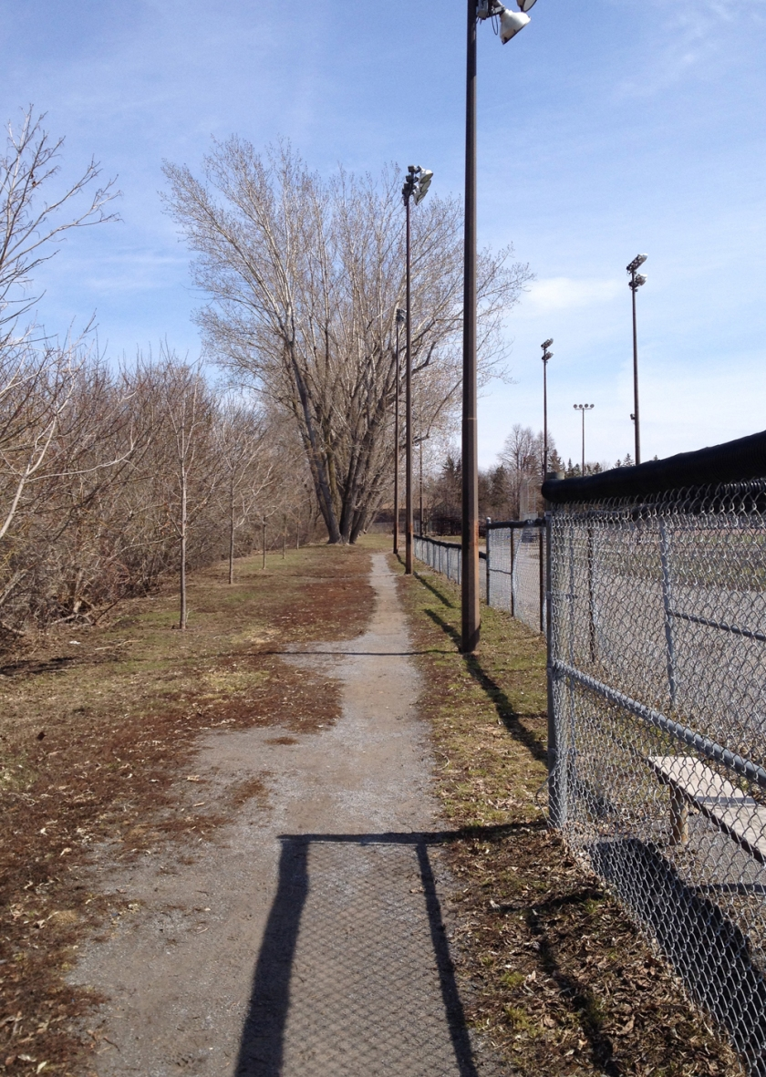 Path behind baseball diamonds