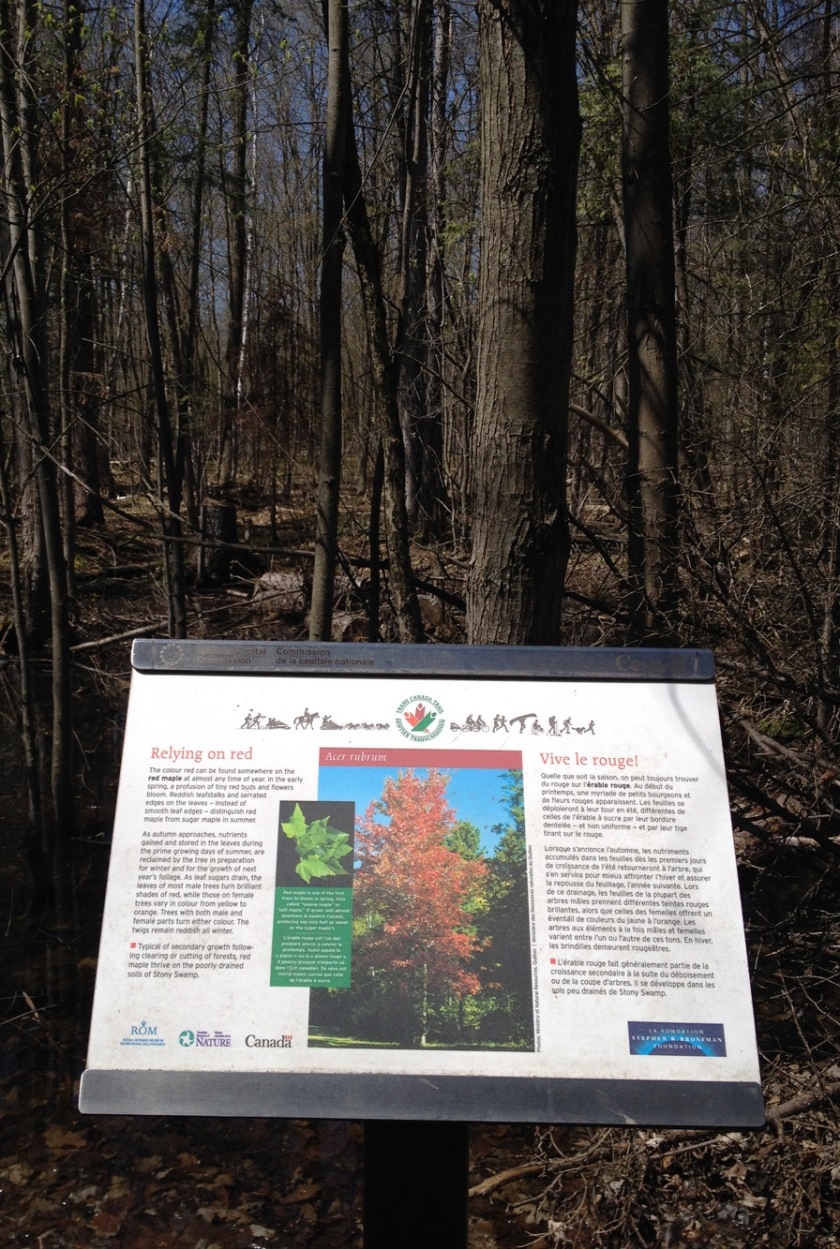 Forest interpretive panel