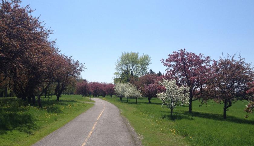 Flowering trees!