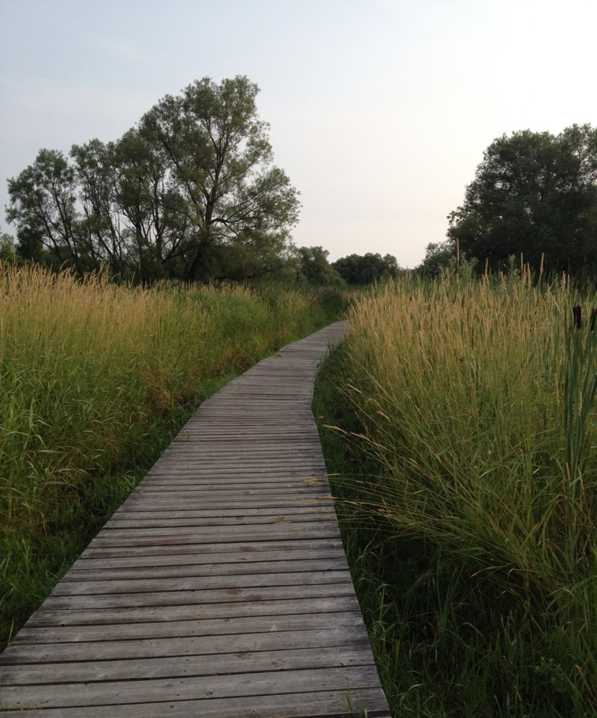 Boardwalk through Conservation Area