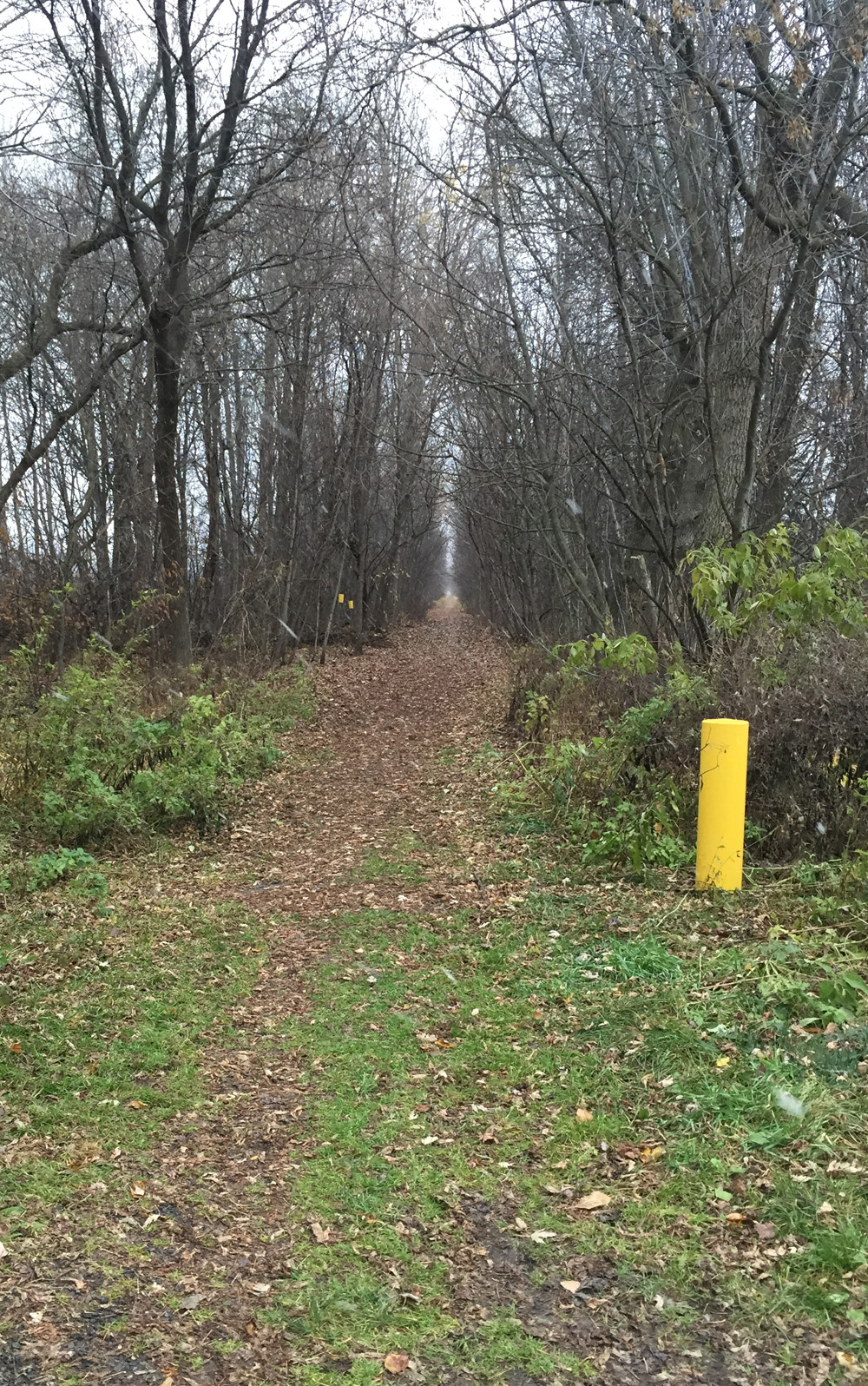 Old rail line beyond Forced Road