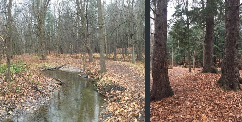 Sherwood Path