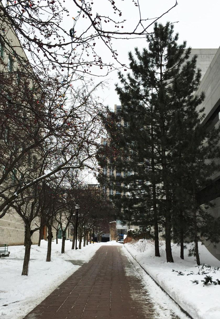 Path beside City Hall