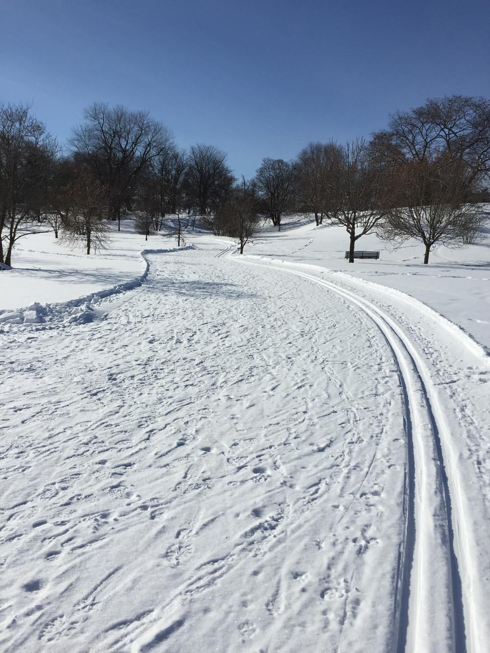 Trail through Arboretum
